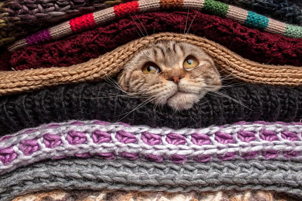 Cat-in-blankets