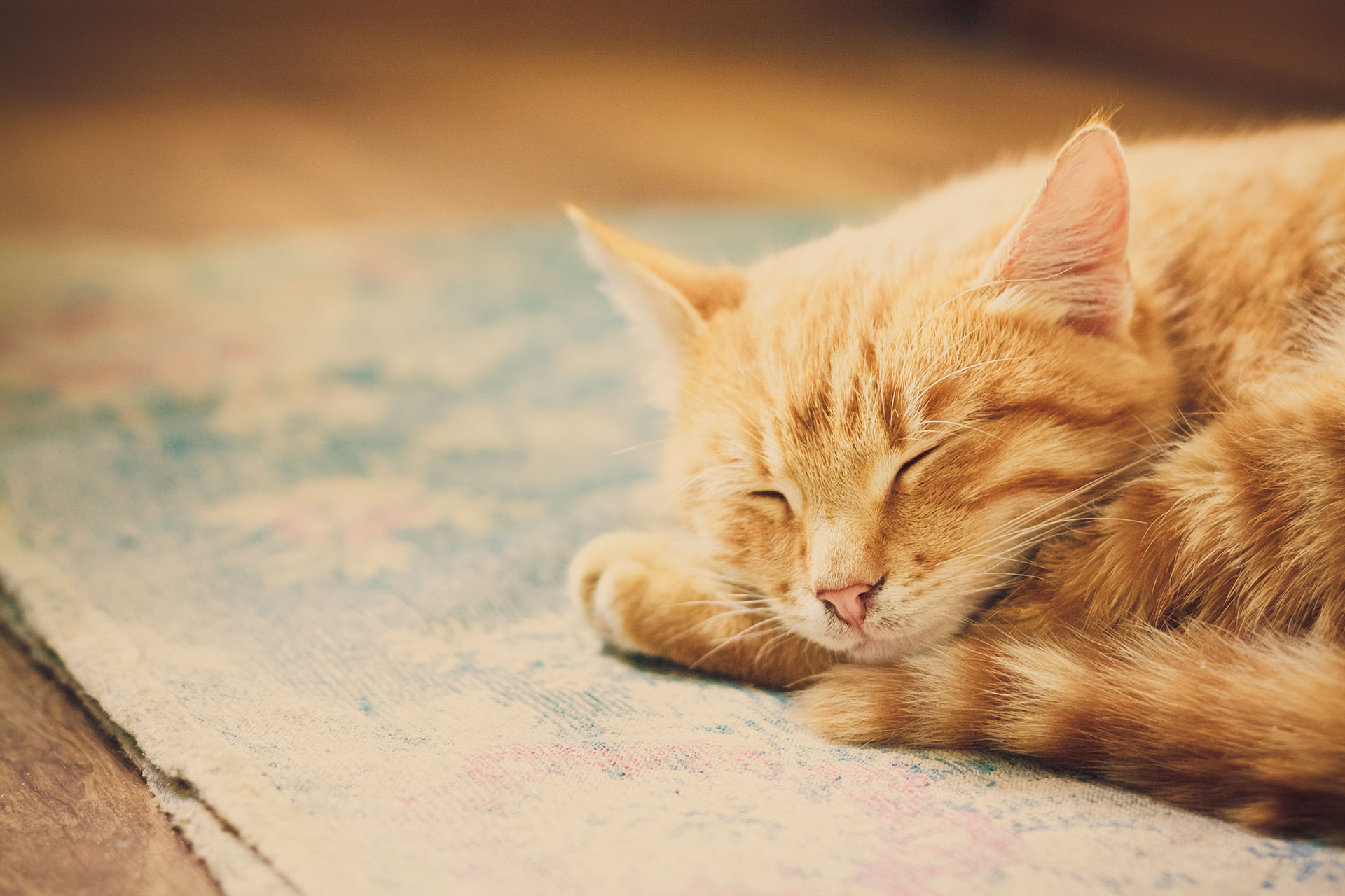 Red Kitten Sleeping